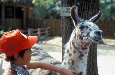 Petting Zoo in the 1970s