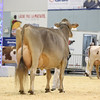 Supreme16_BrownSwiss_L32A9318