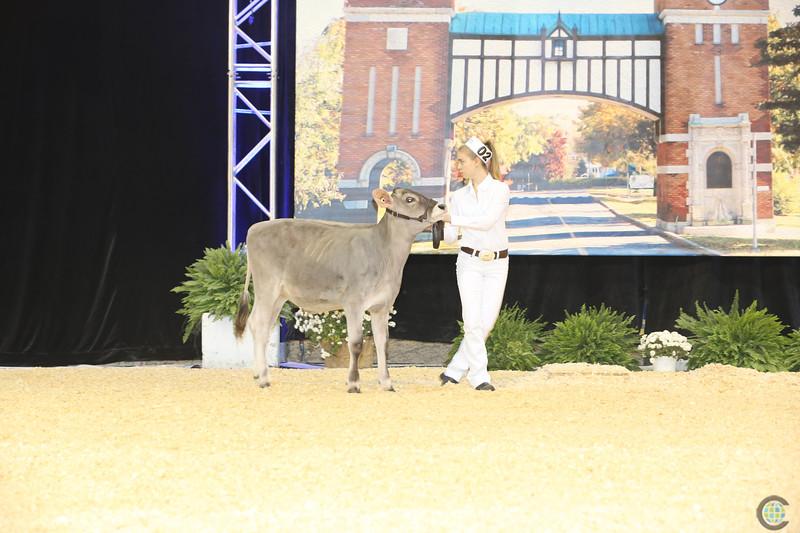 Supreme Dairy Show 2016