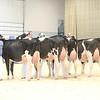 Supreme16_Holstein_L32A1540