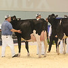 Supreme16_Holstein_L32A1545