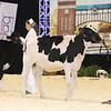 Supreme16_Holstein_L32A0820