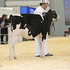 Supreme16_Holstein_L32A0815