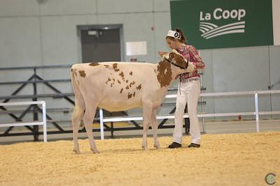Supreme Red Holstein 2016
