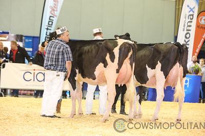 Supreme Holstein Cows 2017