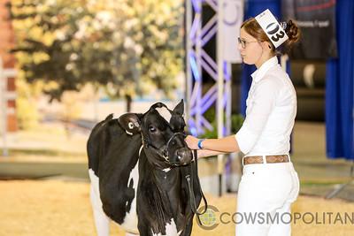Supreme Holstein Heifers 2017