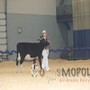 Supreme15_Holstein_1E6A0085
