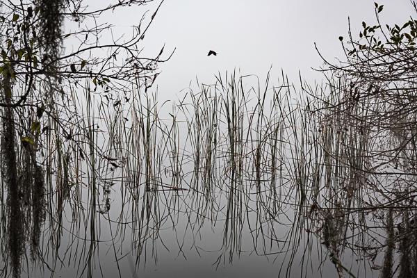 Foggy Morning, Lake Hollingsworth