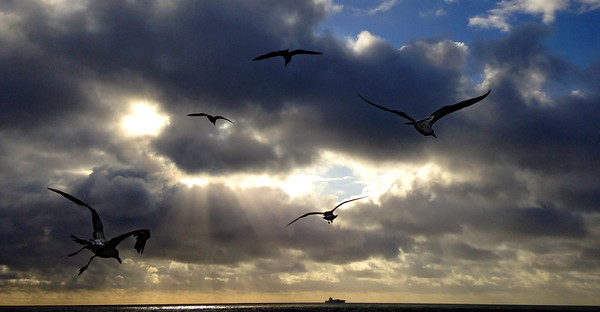 Floating Gulls