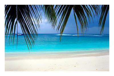 Mentawai Palm