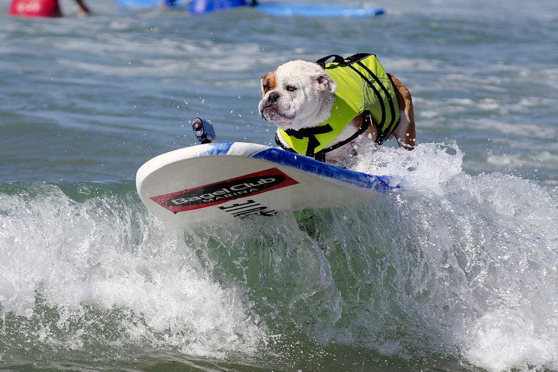 World-Famous Surf Dog Competitionin Huntington Beach, California