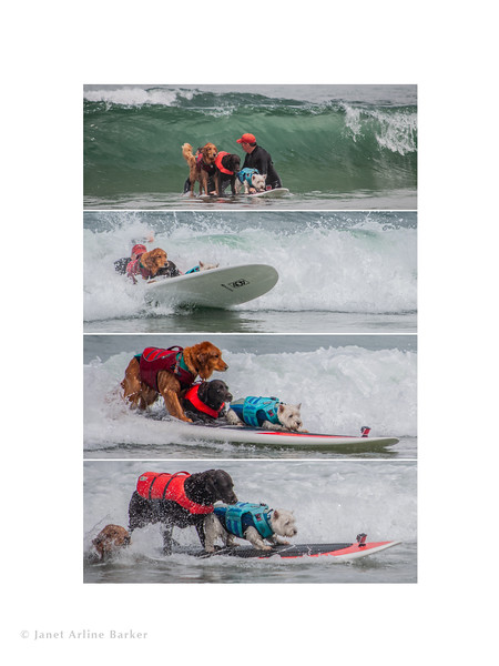 SURFDOG SEQUESNCE