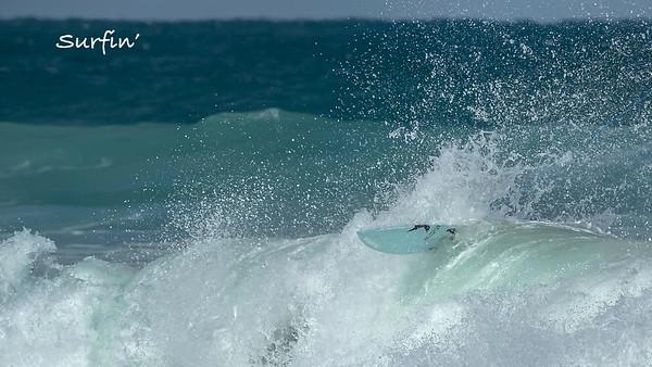 Surfin' Sebastian