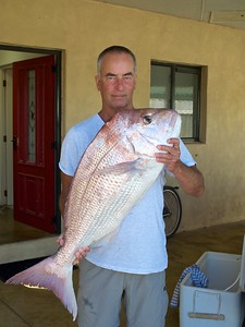 Big New Zealand Snapper