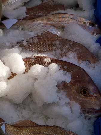 Some of the bigger fish in the ice bin