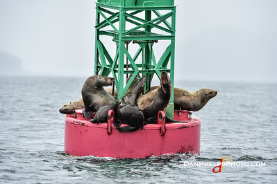 2018 Alaska-247