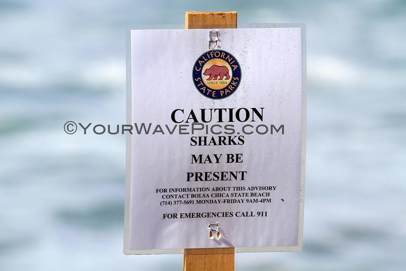 2016-02-25_Bolsa HQ_Shark Sign_4859.JPG