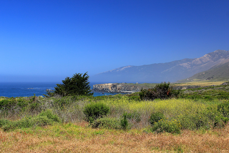 0610_Sand Dollar Beach meadow.JPG