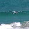 Sand Dollar Beach dolphins_9690.JPG