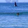 *Frank_Bautista_Whale_042.JPG