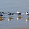 Birds_0160.JPG