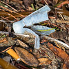 Outer plastic shell casing from a single shot from a single gun. No one picks these up and the ocean is full of them!