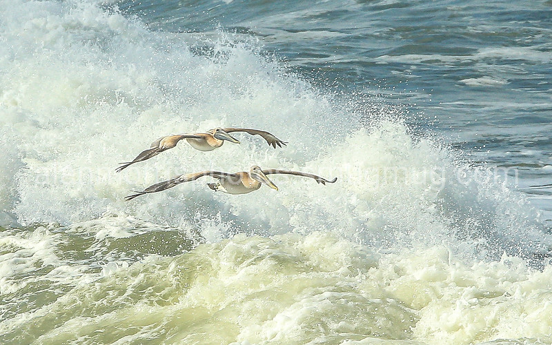 September 26 Wrightsville Beach - Crystal Pier-79-2