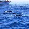 2016-02-16_Dolphins_0235.JPG