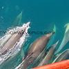 2016-02-09_Dolphins_0141.JPG