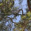 Can you spot the koala?