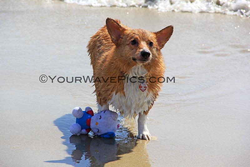 2015-04-11_Corgi Beach Day_34.JPG