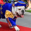 Bellman Bulldog_0055.JPG