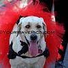 Haute Dog Howl'oween Parade 10/28/12  -  IMG_1734.JPG