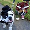 Haute Dog Howl'oween Parade 10/28/12  -  Mutley_Viva_9568.JPG