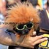 Haute Dog Howl'oween Parade 10/28/12  -  Lion_1745.JPG