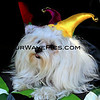 Haute Dog Howl'oween Parade 10/28/12  -  MardiGras_Sarandon_1758.JPG