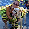 Haute Dog Howl'oween Parade 10/28/12  -  Bumble Bees_9530.JPG