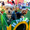 Haute Dog Howl'oween Parade 10/28/12  -  Harley_0447.JPG
