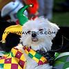 Haute Dog Howl'oween Parade 10/28/12  -  MardiGras_Herby_1755.JPG