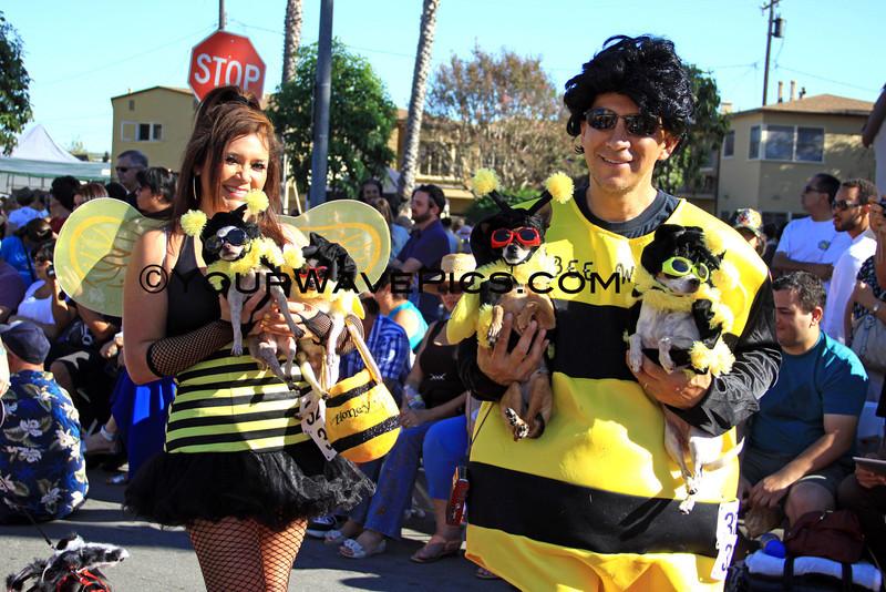 Haute Dog Howl'oween Parade 10/28/12  -  Beewawas_9512.JPG