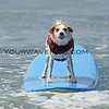 """Buddy had just won the 'Overall 1st Place' award in the 2009 Helen Woodward Animal Center's Surf Dog Surf-A-Thon so I call this photo """"Buddy's Winning Smile"""""""