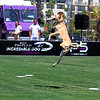 Purina ProPlan Incredible Dog Challenge