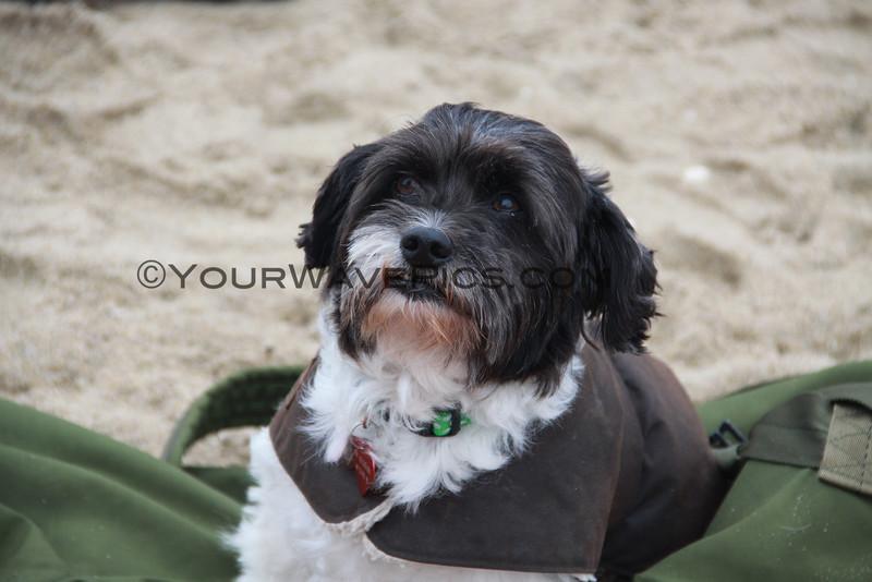 Surf Dog Toby