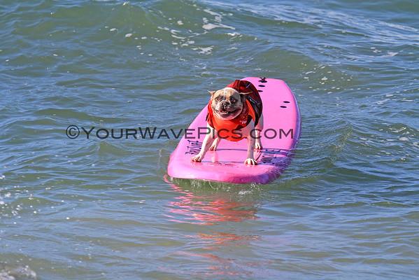 Surf City Surf Dog 9/28/14