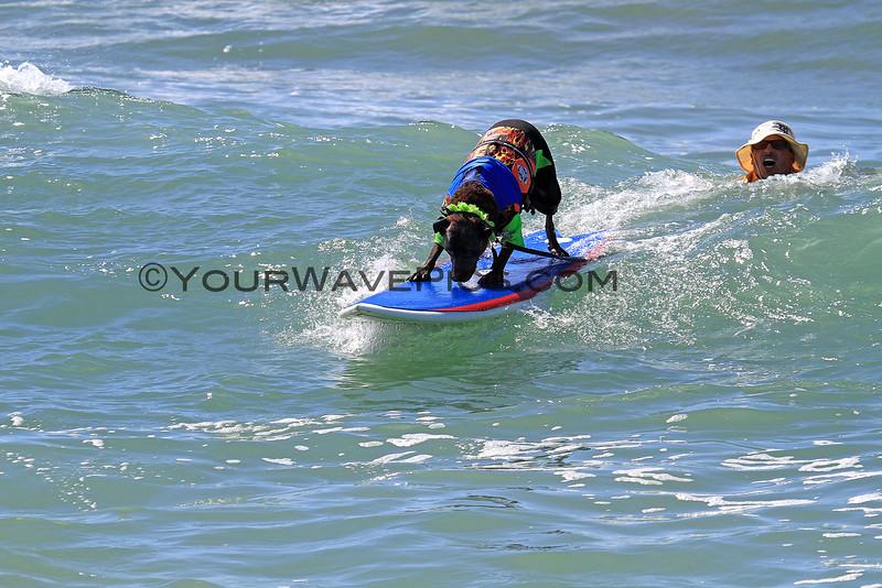 Booker D Surfdog_6624.JPG
