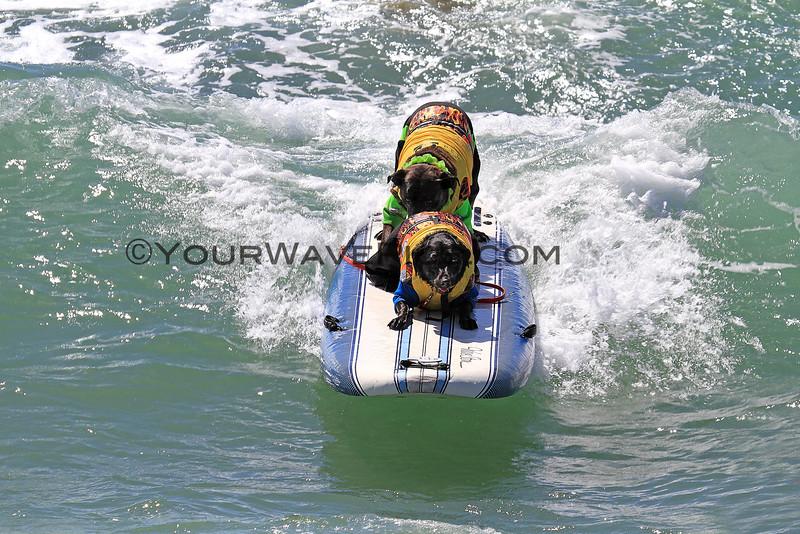 Booker D Surfdog_Onyx Shorepound_6825-6794.JPG