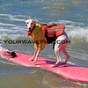 Beans_7846.JPG<br /> 3rd place Medium Dogs and Best Newbie