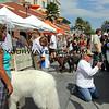 Surf City Surf Dog costume contest
