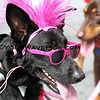 Surf City Surf Dog - Costume Contest and Owner Lookalike Contest
