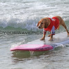 Hugsley_2016-03-06_Noosa_Surfing Dog Spectacular_75.JPG